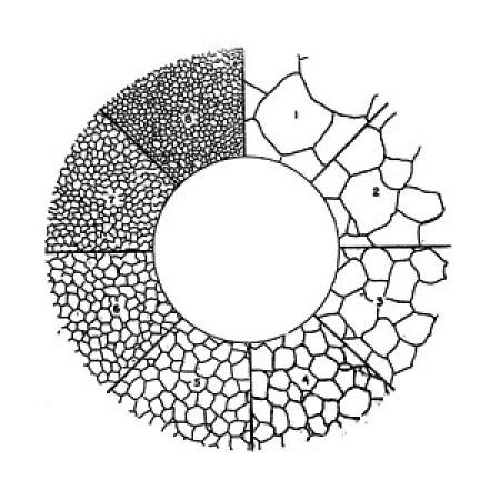 Eyepiece Reticle for Austenite Grain Size